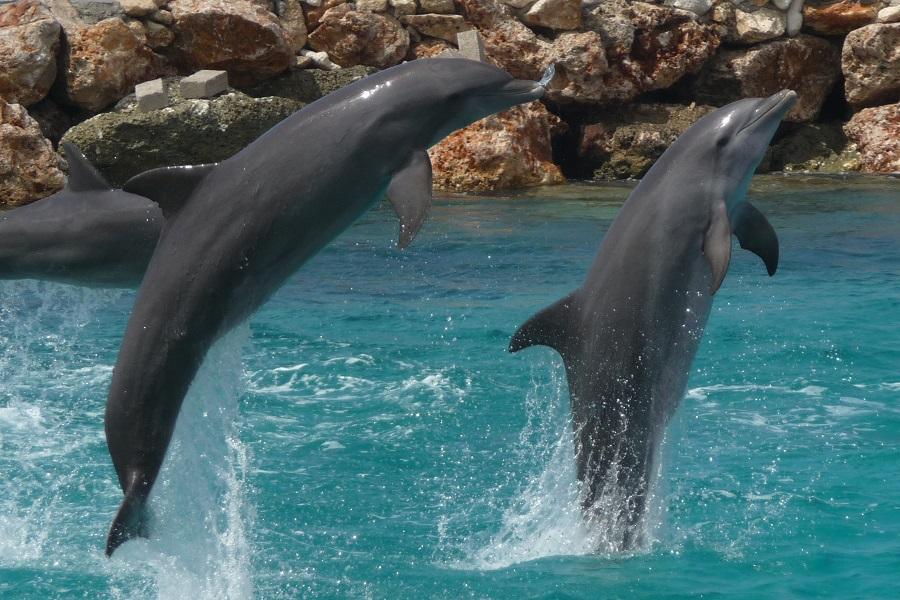 DolphinAcademy2